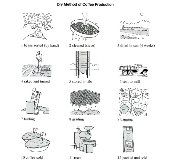 the illustrations below show how coffee is sometimes