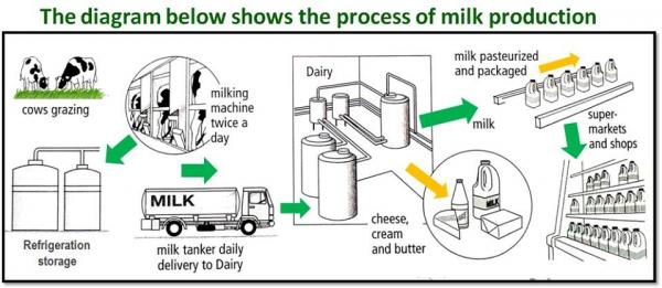 The Process Of Milk Production Testbig