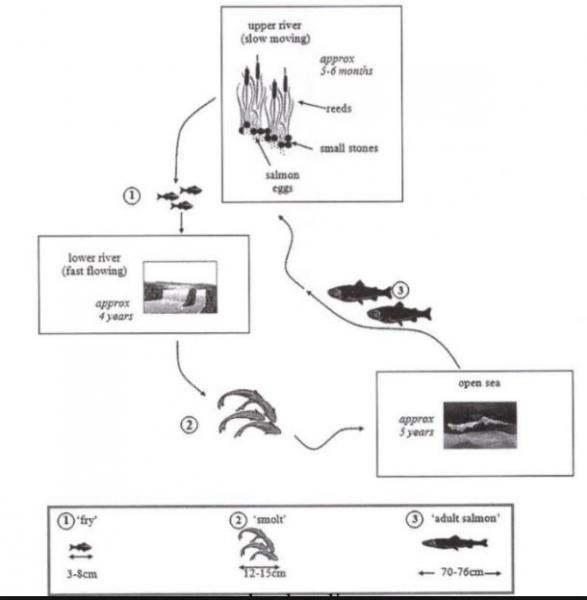 The Diagram Below Show The Life Cycle Of A Species Of Large Fish