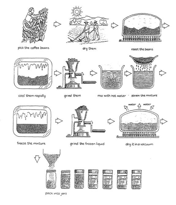 the diagram below shows how coffee is produced and prepared for sale