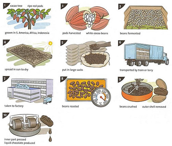 the illustrations show how chocolate is produced com essay topics the illustrations show how chocolate is produced