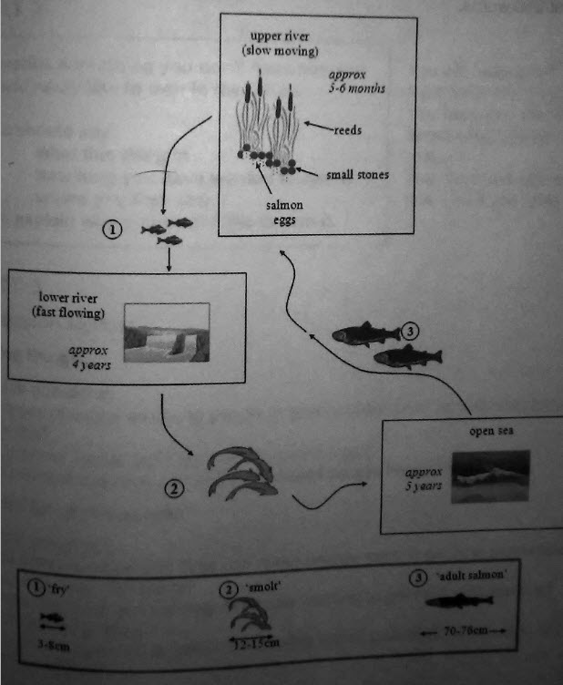 The diagrams below show the life cycle of a species of large fish ...